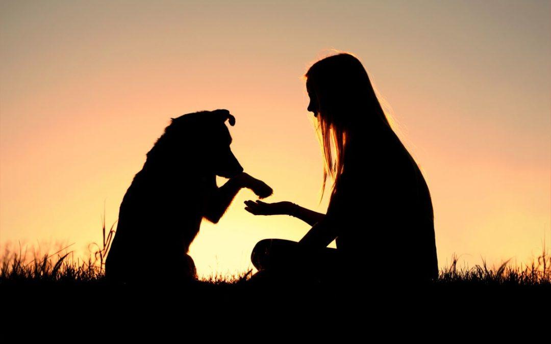 Dyr elsket betingelsesløst. Dyr forstår og de tilgir.