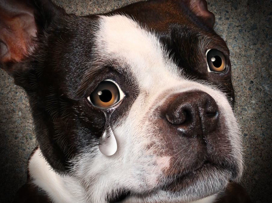 Hunden som ble seksuelt misbrukt