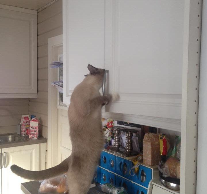 Katten som åpner dører og elsker q-tips og banan