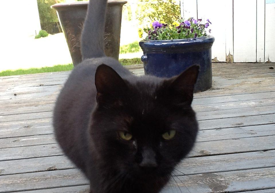 Katten som fotalte at kattevennen hans hadde vondt og trengte behandling