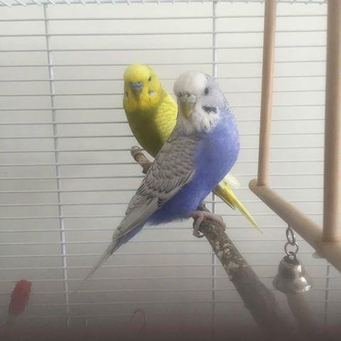 Grep skjebnen inn i fuglenes liv?