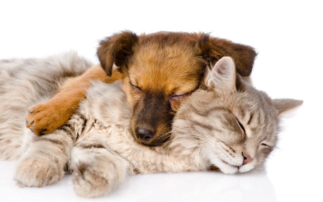 Sorgen over et dyr….