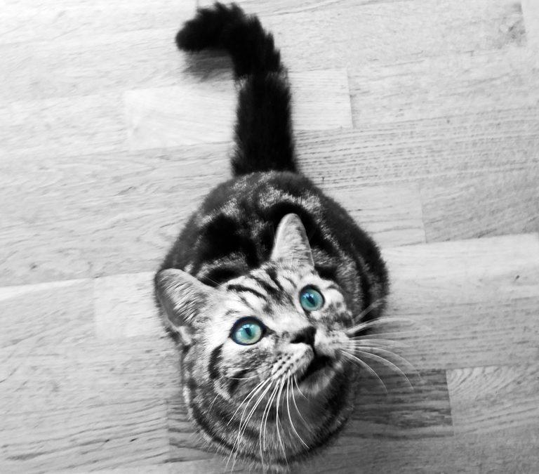 Katten som fortalte at han hadde «talefeil»