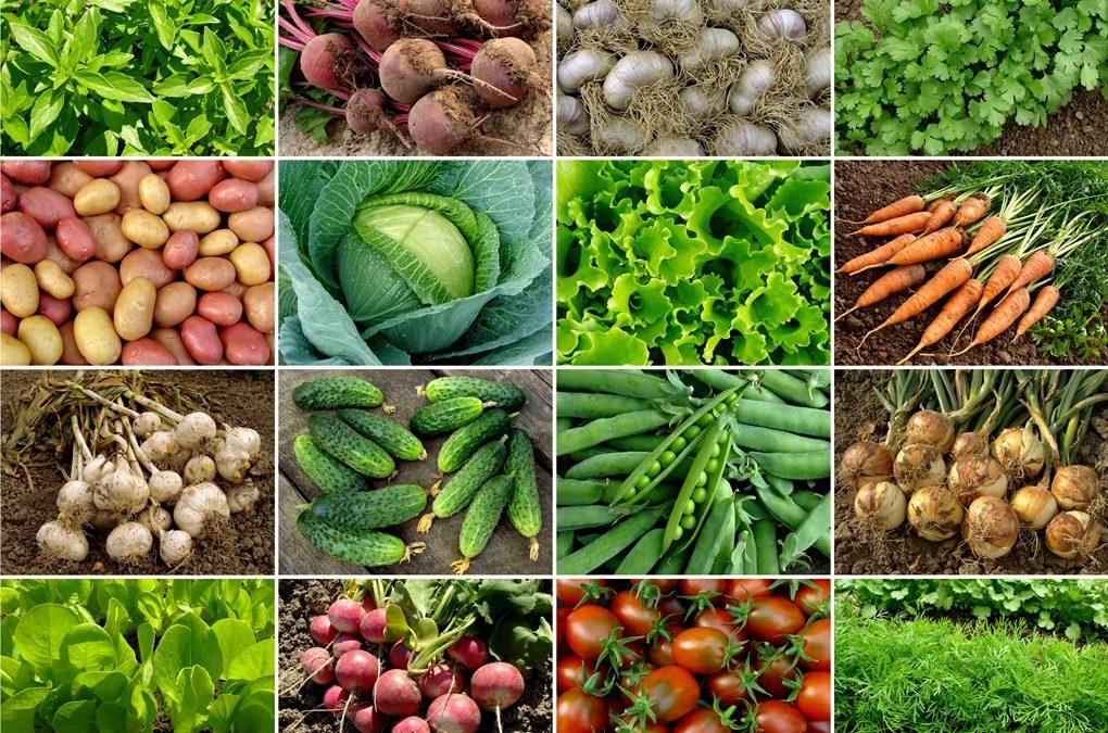 Barn av mødre som spiser økologisk, har lavere risiko for å utvikle allergi og eksem.
