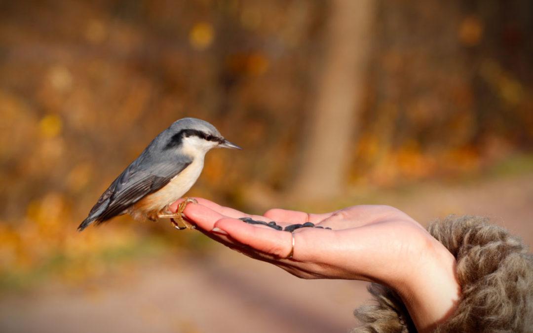 Dyrene og fuglene vil komme til deg, sa hun. Og slik ble det.