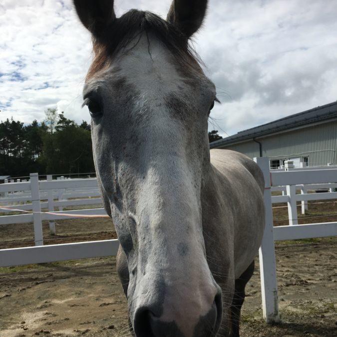 Hesten som fortalte dyretolken at den hadde vondt i en hov