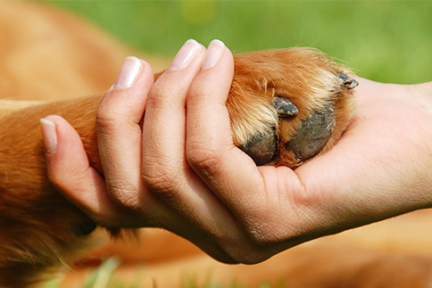 dyrekommunikasjon