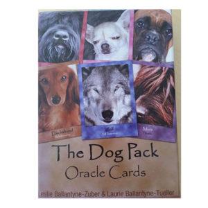 HUNDEKORT – Hva kan vi lære av hundene?