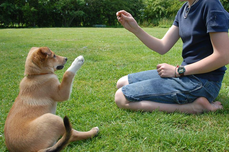 Hunden som ønsket at eieren skulle få kjæreste
