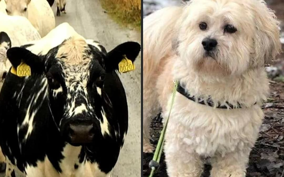 Det blåser en kald vind over Norge: Slik behandler vi mennesker og dyr.