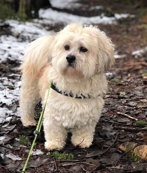 Hundeekspert med 33 års erfaring sier at Teddy ikke er en farlig hund